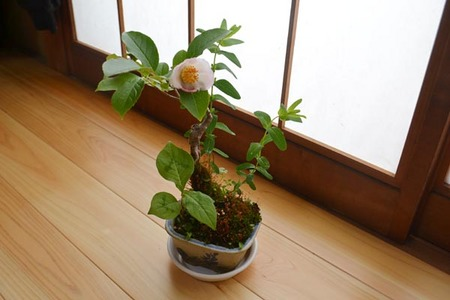 bonsai-2017-0528-01.jpg