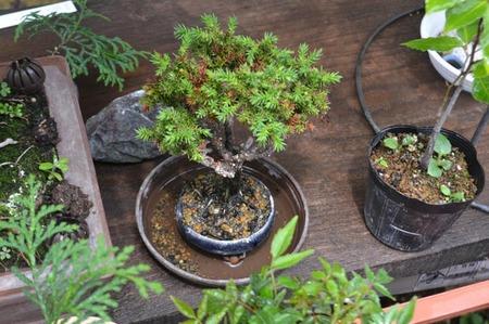 bonsai-2017-0531-04.jpg