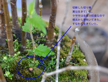bonsai-2017-0605-03.jpg