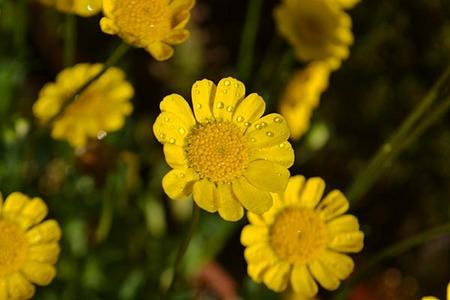 flower-0503.jpg