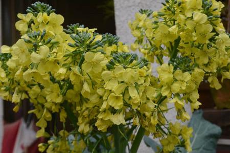 flower-sp.jpg