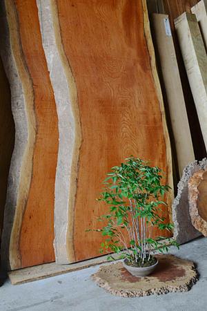 keyaki-bonsai-ita.jpg