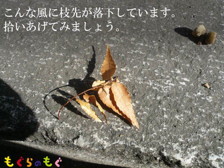 keyaki-kikaku-tane03.jpg