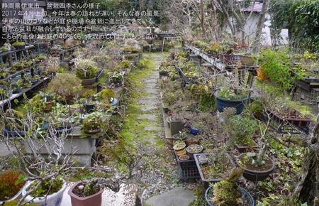 shiki-2017.4-01.jpg