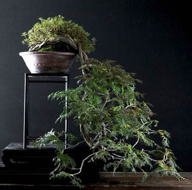 bonsai-2017-0326-09.jpg