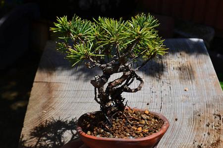 mogu-bonsai-20190413-19.jpg