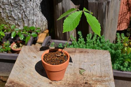 mogumogu-bonsai-2019-0502-01.jpg