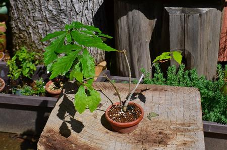 mogumogu-bonsai-2019-0502-03jpg.jpg