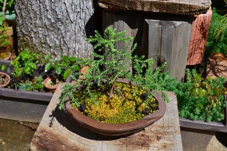 mogumogu-bonsai-2019-0502-05jpg.jpg